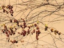 Teste padrão bonito de ramos da hera Imagem de Stock Royalty Free