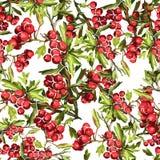 teste padrão bonito de Rowan Imagens de Stock Royalty Free