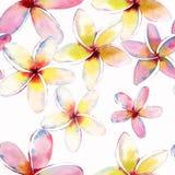 Teste padrão bonito bonito tropical erval floral verde bonito brilhante de Havaí do flores amarelas brancas cor-de-rosa vermelhas Foto de Stock Royalty Free