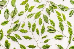 Teste padrão botânico feito das folhas verdes, ramos no fundo branco Fotos de Stock