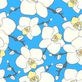 Teste padrão branco do vetor da orquídea O vetor floresce o fundo ilustração stock