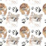 Teste padrão - cão do companheiro ilustração royalty free