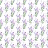 Teste padrão com alfazema Imagem de Stock Royalty Free