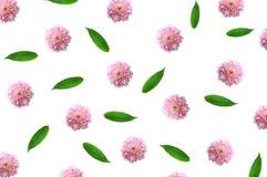 Teste padrão com as flores em botão, ramos cor-de-rosa e as folhas isolados Imagens de Stock Royalty Free