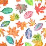 Teste padrão com as folhas de outono da aquarela Imagem de Stock Royalty Free