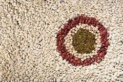 Teste padrão com feijões brancos, os feijões vermelhos, o mung e o grão-de-bico foto de stock
