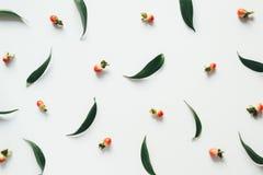 Teste padrão com folhas e bagas Fotos de Stock