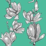 Teste padrão com magnólia de florescência Mão desenhada ilustração do vetor