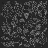 Teste padrão com o Linden da bolota de Mapple do carvalho das folhas de outono Imagem de Stock