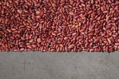 Teste padrão com os feijões vermelhos no fundo cinzento imagens de stock royalty free