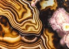 Teste padrão cor-de-rosa da ágata de Brown Turritella Imagens de Stock Royalty Free