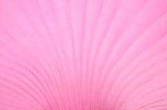Teste padrão cor-de-rosa do cogumelo; textura Imagens de Stock