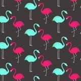 Teste padrão cor-de-rosa e verde do flamingo Projeto do papel de parede Foto de Stock