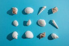 Teste padrão criativo da concha do mar no fundo azul pastel Conceito mínimo do verão imagens de stock