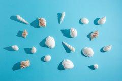 Teste padrão criativo da concha do mar no fundo azul pastel Conceito mínimo do verão fotografia de stock royalty free