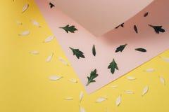 Teste padrão criativo feito da pétala branca e das folhas verdes em cor-de-rosa e claro pasteis - fundo amarelo Conceito mínimo,  imagem de stock