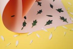Teste padrão criativo feito da pétala branca e das folhas verdes em cor-de-rosa e claro pasteis - fundo amarelo Conceito mínimo,  fotografia de stock royalty free