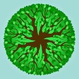 Teste padrão da árvore de carvalho - verão Foto de Stock Royalty Free
