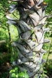 Teste padrão da árvore de Plam Fotos de Stock
