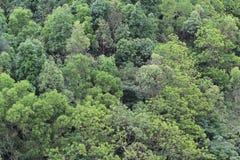 Teste padrão da árvore verde no nautre Foto de Stock Royalty Free