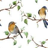 Teste padrão da aquarela com ramos e pássaros de árvore Ornamento pintado à mão da mola com redbreads do pisco de peito vermelho  ilustração royalty free