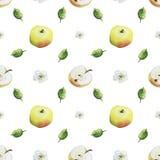Teste padrão da aquarela das maçãs ilustração do vetor