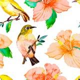 Teste padrão da aquarela Pássaros e flores tropicais Fotografia de Stock Royalty Free