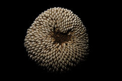 Teste padrão da cabeça da semente do girassol Fotos de Stock