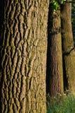 Teste padrão da casca de árvore fotos de stock royalty free
