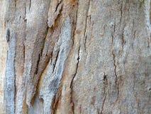 Teste padrão da casca de árvore Imagem de Stock Royalty Free