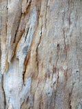 Teste padrão da casca de árvore Imagem de Stock