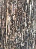 Teste padrão da casca de árvore Fotografia de Stock