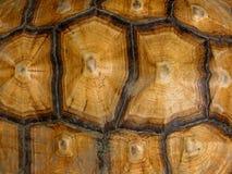 Teste padrão da concha de tartaruga Fotografia de Stock