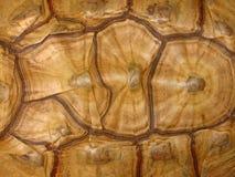 Teste padrão da concha de tartaruga Imagens de Stock Royalty Free