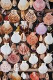 Teste padrão da concha do mar Foto de Stock