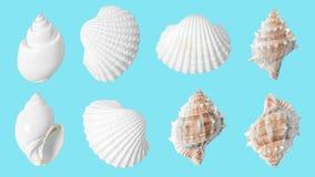Teste padrão da concha do mar no fundo azul Conceito mínimo do verão foto de stock