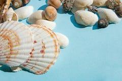 Teste padrão da configuração do plano das conchas do mar no fundo azul, fundo das férias do mar com espaço da cópia, vista superi foto de stock