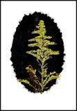 Teste padrão da erva daninha Fotos de Stock