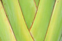 Teste padrão da filial decorativa da banana Imagens de Stock