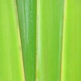 Teste padrão da filial decorativa da banana Fotografia de Stock