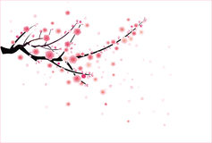 Teste padrão da flor da cereja ou da ameixa Fotografia de Stock