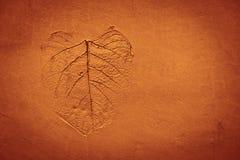 Teste padrão da folha carimbado na argila Fotos de Stock Royalty Free