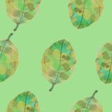 Teste padrão da folha da aquarela Foto de Stock