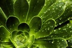 Teste padrão da folha da chuva imagens de stock