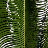 Teste padrão da folha da palmeira Imagem de Stock