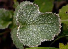 Teste padrão da folha da planta verde com beira branca da escarcha imagens de stock royalty free