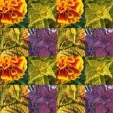 Teste padrão da folha e da flora fotografia de stock royalty free