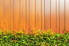 Teste padrão da folha na placa de madeira Fotografia de Stock