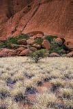 Teste padrão da grama e da rocha Fotos de Stock