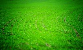 Teste padrão da grama verde Fotografia de Stock
